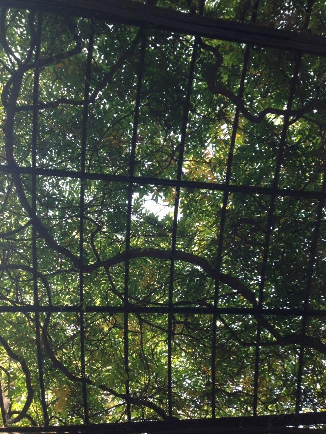Garden Ceiling