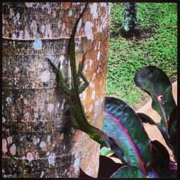Lizard On Tree