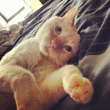 Momo In Bed Cute