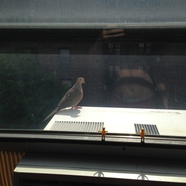 Dove on the AC