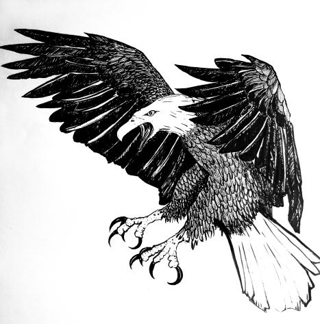 Screeching Eagle