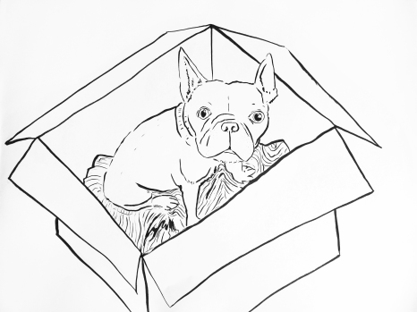 Charlie in a Box